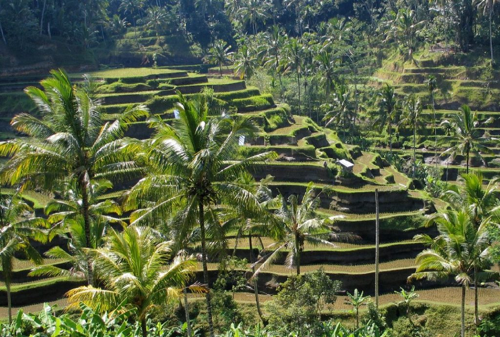 Bali Digital Nomad Visa