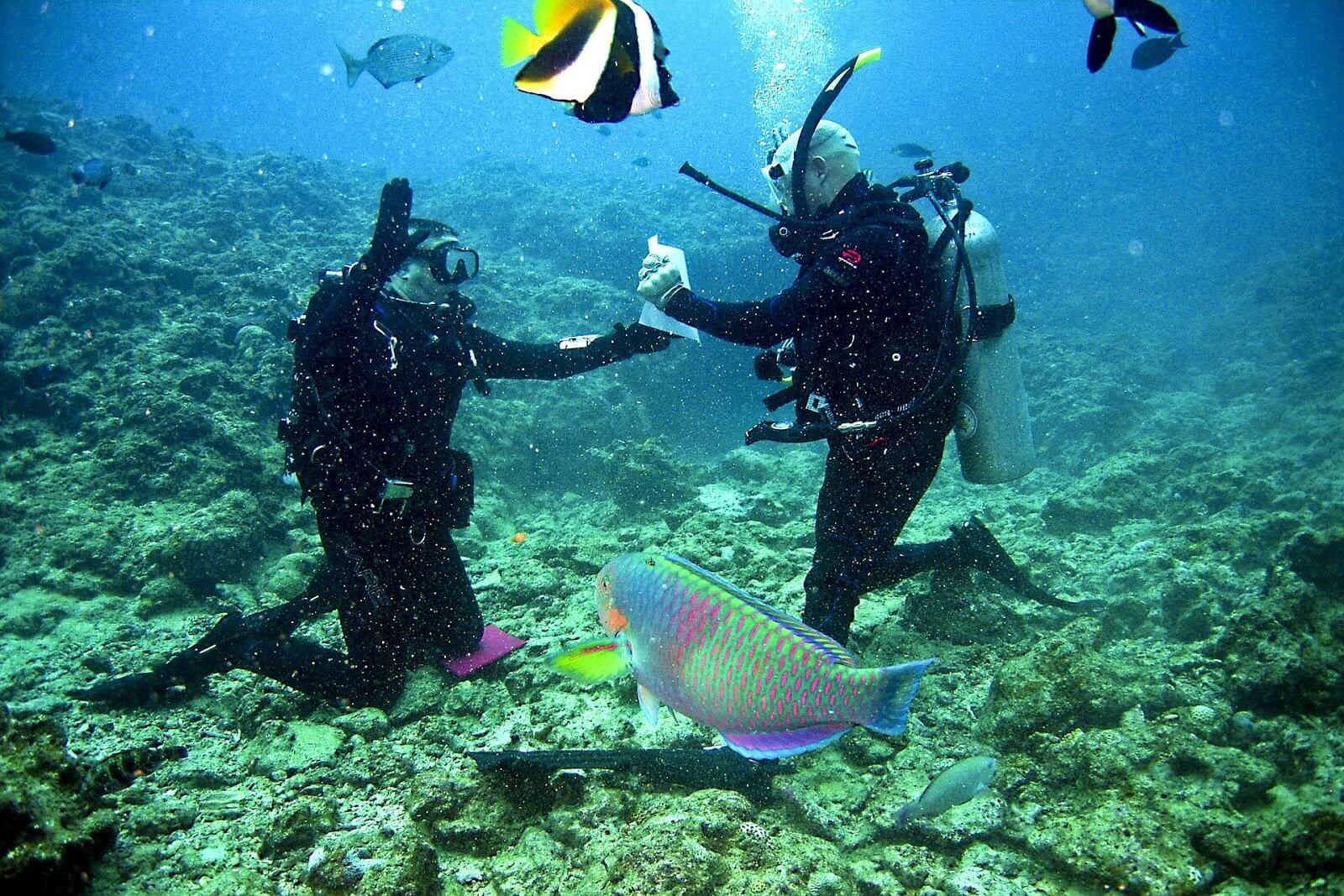 Jobs That Allow You To Travel: Scuba Instructor